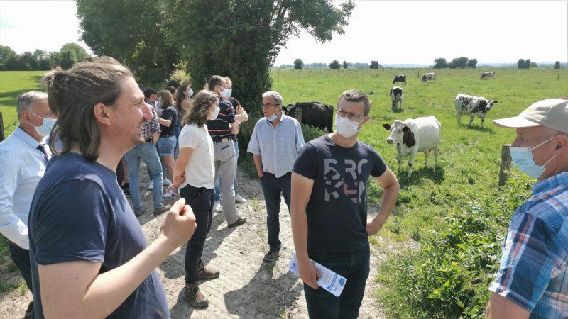 Des vaches qui broutent de l'herbe : une solution d'avenir pour la planète et les agriculteurs