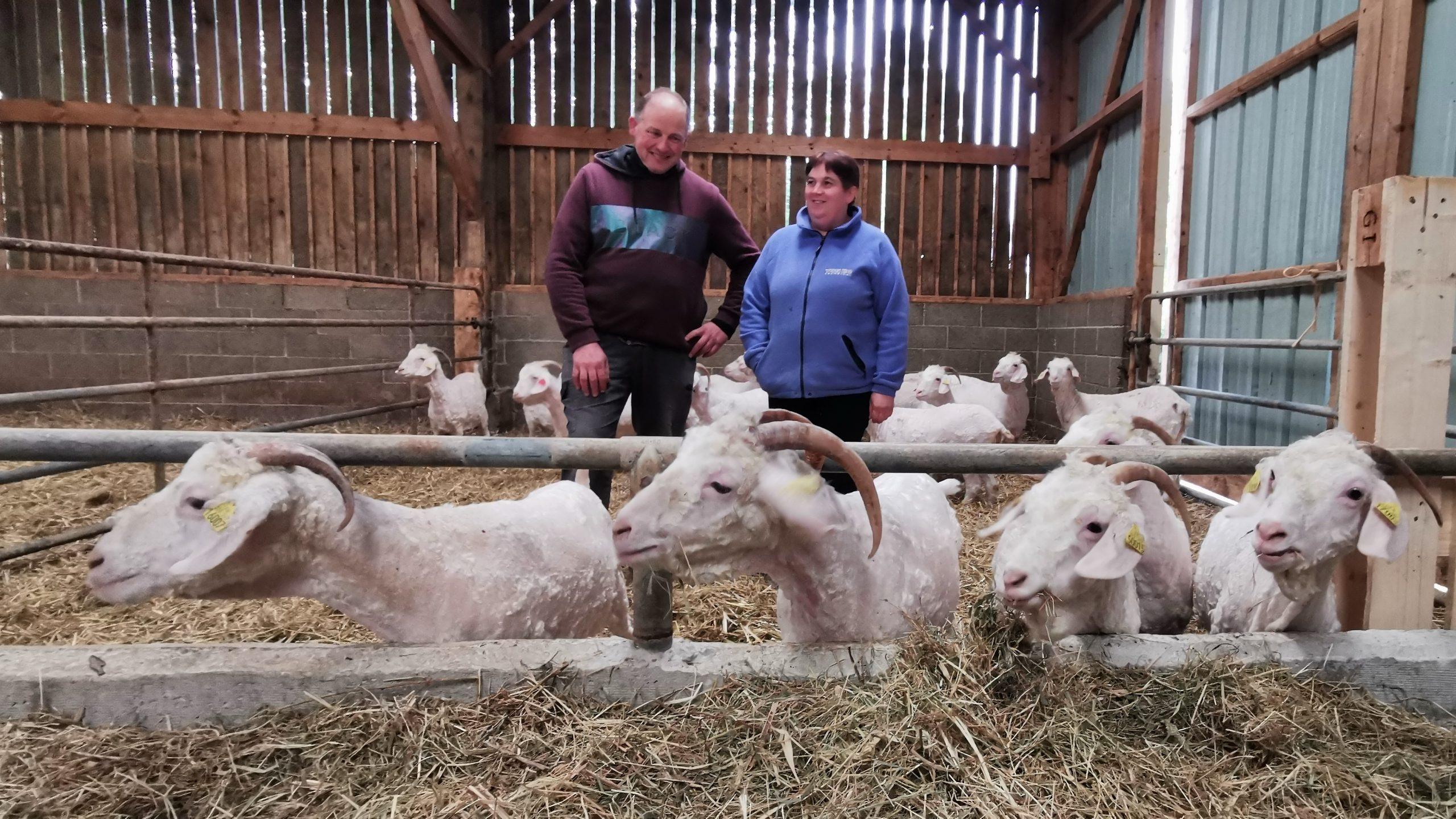 À Bours, le couple Boucly se spécialise dans le Mohair: la laine de boucs et de chèvres angora